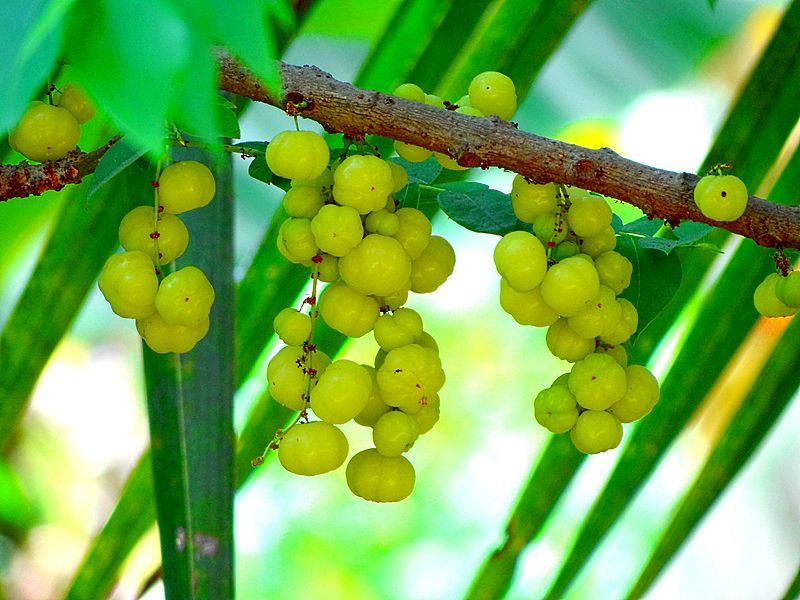 Amla for Hair: Benefits of Amla and How to Use Amla for Hair Growth