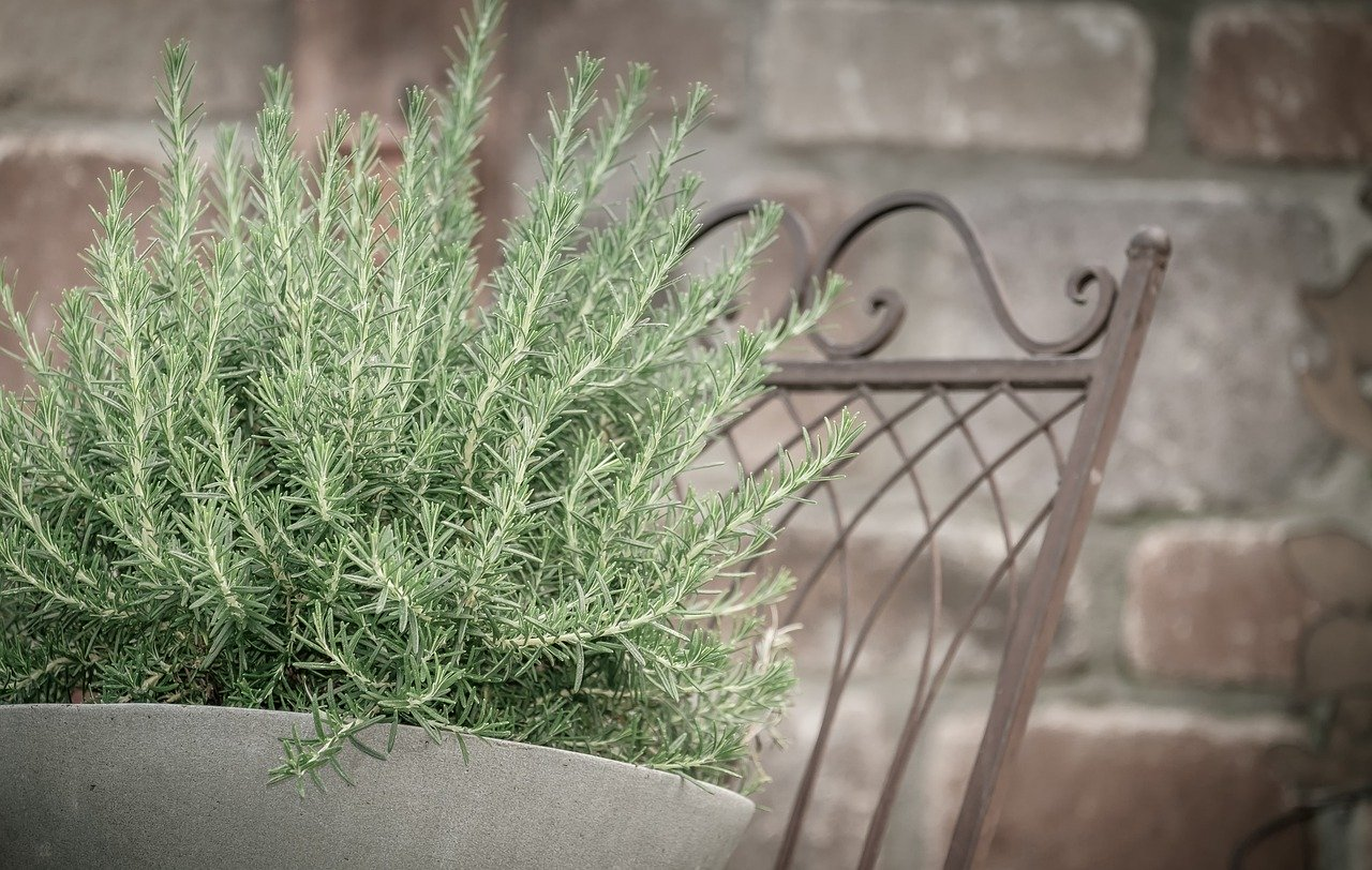 Rosemary Oil for Hair Loss Study Reveals it Works Better than Rogaine